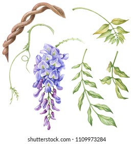 Watercolor elements of wisteria, flowers and leaves.