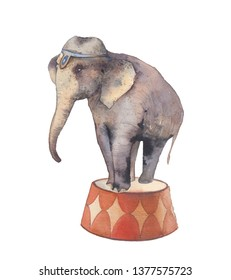 Watercolor elephant illustration. Hand painted circus animal isolated on white background.