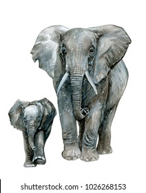 Watercolor elephant with little baby. Hand drawn illustration isolated on white.