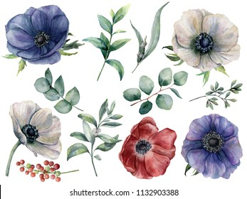 Watercolor eucalyptus and anemone floral set. Hand painted blue, red and white anemone, berry, eucalyptus leaves and branches isolated on white background. Illustration for design, print or fabric