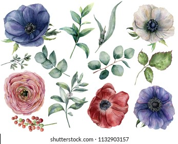 Watercolor eucalyptus, anemone and ranunculus floral set. Hand painted blue, red and white anemone, berry, eucalyptus leaves and branches isolated on white background. Illustration for design, print