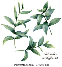 Watercolor eucalyptus branch set. Hand painted exotic leaves isolated on white background. Botanical floral illustration. For design or print