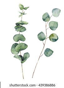 Watercolor eucalyptus round leaves and branches. Hand painted baby eucalyptus and silver dollar elements. Floral illustration isolated on white background. For design, textile and background.