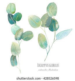 Watercolor eucalyptus with round leaves. Hand painted green branches with leaves isolated on white background. Botanical elements for floral design