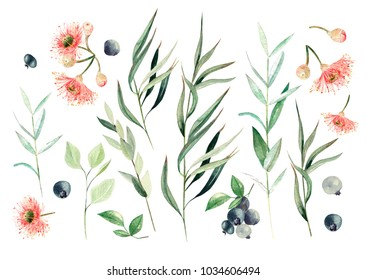 Watercolor eucalyptus set. Hand painted eucalyptus elements and berry. Floral illustration  isolated on white background.For design and textile.