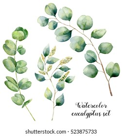 Watercolor eucalyptus set. Hand painted baby, seeded and silver dollar eucalyptus elements. Floral illustration with round leaves and branches isolated on white background. For design and textile.