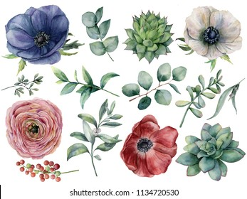Watercolor eucalyptus, succulent and ranunculus floral set. Hand painted blue, red and white anemone, berry, eucalyptus leaves isolated on white background. Illustration for design, print