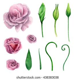 Watercolor eustoma purple pink flowers clipart stock illustration purple and pink flowers clipart floral isolated mightylinksfo