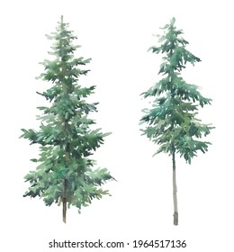 Watercolor evergreen tree set. Hand painted forest trees isolated on white background