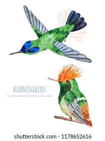 Watercolor exotic birds collection. Different species of hummingbirds.Perfect for wedding,invitations,greeting cards,quotes,pattern,bouquet,logos,Birthday cards,wallpapers.