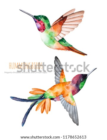 Royalty Free Stock Illustration Of Watercolor Exotic Birds