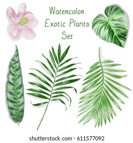 Watercolor Exotic Leaves Pattern