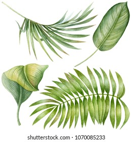 Watercolor exotic tropical palm leaves.