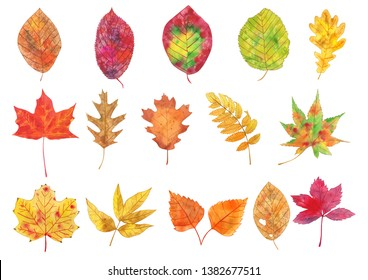 Watercolor Fall Leaves Illustration, Fall Leaves Clipart