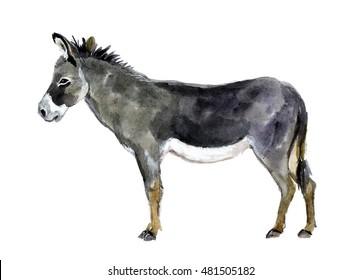 donkey images stock photos vectors shutterstock