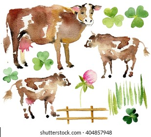 Watercolor farm set. Realistic illustration of a cow and her veal on white. Flower of the clover. Watercolor set.