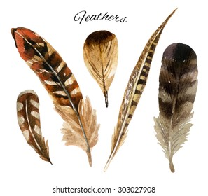 watercolor feather set, hand drawn illustration isolated on white background
