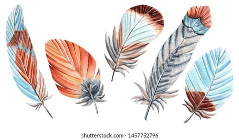 Watercolor Feather Set on White background. Decoration illustrat