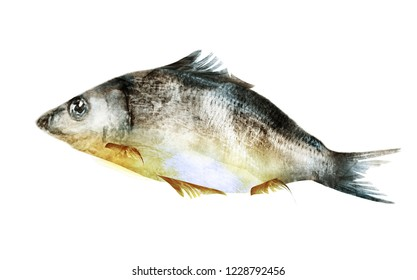 Watercolor fish on white