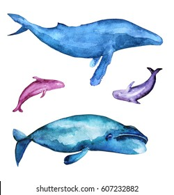 Watercolor fish set. Isolated illustration with Bow head whale, Humpback whale and dolphins.
