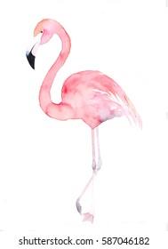 Watercolor flamingo. Painted image