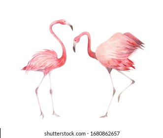 Watercolor flamingos set. Hand drawn  birds isolated on white background.