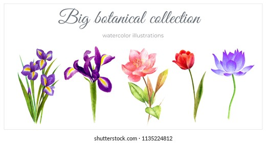 Watercolor floral botanica garden and wild flowers, leaves, branches, illustration isolated on white background, bud, wedding invitation, floral postcard