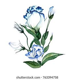 Watercolor floral bouquet. Flower delicate bouquet of flowers Eustoma, Lysianthus.