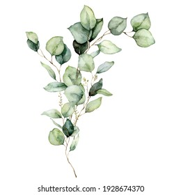 Watercolor floral card of eucalyptus leaves, seeds and branches. Hand painted silver dollar eucalyptus bouquet isolated on white background. Illustration for design, print, fabric or background.