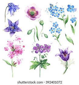 Watercolor floral collection with beautiful wild flowers, Anemone, Forget-me-not, Poppy, Columbine flowers. Summer meadow flowers. Floral set for beautiful design