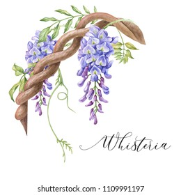 Watercolor floral corner. Wisteria flower.
