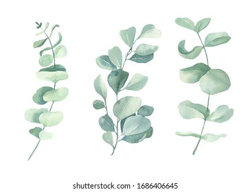 Watercolor floral illustration set - green eucalyptus leaf branches collection, for wedding invitation, greetings cards, wallpapers,  background. Eucalyptus, green leaves.
