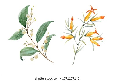 watercolor floral illustration, white and orange flowers, isolated object on white background