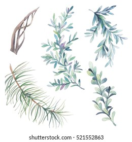 Watercolor floral objects set. Winter collection of branches and leaves elements isolated on white background. Hand drawn plants clip art