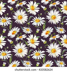 watercolor floral pattern daisy, white gentle chamomile, medicinal plant, seamless pattern, black background