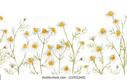Watercolor floral pattern, delicate flower wallpaper, wildflowers , flowers medical daisies. Horizontal  seamless pattern
