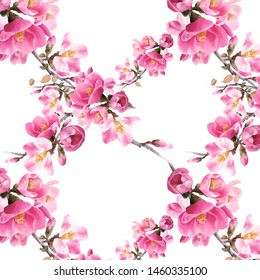 Watercolor floral seamless pattern with red japan quince flowers on an isolated white background.