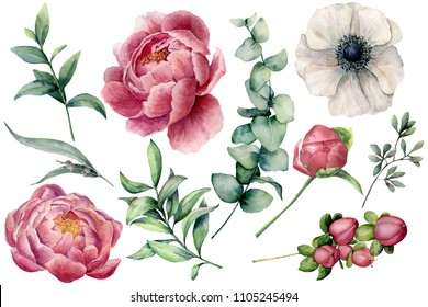 Watercolor floral set with flowers and eucalyptus branch. Hand painted peony, anemone, berries and leaves isolated on white background. Natural illustration for design, print, fabric or background.