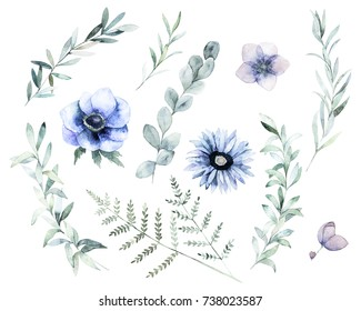 Watercolor floral set. Hand drawn isolated illustration. Botanical art background