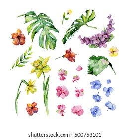 Watercolor floral set. Hydrangea flower, herbs, daffodil, lilac, tropical leaves, dense jungle,  hibiscus. Hand painted. Use it for textile decoration print, invitation card, wedding or wrapping paper