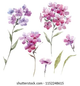 Watercolor floral set of isolated objects, pink phlox flowers