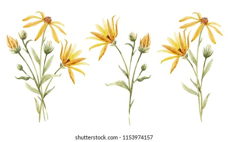 Watercolor floral set of isolated objects, yellow flowers Jerusalem artichoke, topinambour