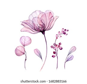 Watercolor floral set isolated on white. Transparent rose collection of leaves, berries, branches in pastel pink, grey, violet, purple. Botanical illustration for wedding design, greeting cards