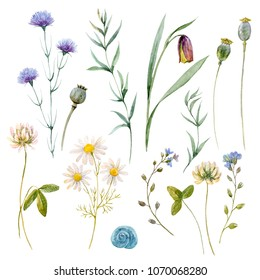 Watercolor floral set, meadow plants, chamomile and clover, poppy seeds, sweet blue snail