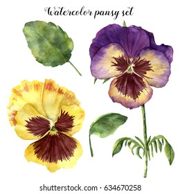 Watercolor floral set with pansy. Hand painted illustration with leaves, viola flowers and branches isolated on white background. For design, print and fabric.