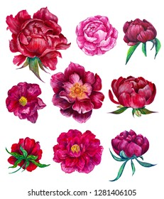 watercolor floral set of peonies