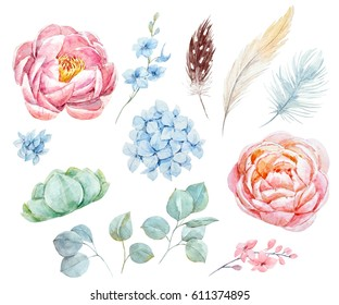 Watercolor floral set. Peonies and succulents.Blue hydrangea.  Leaves of eucalyptus. Bird feathers
