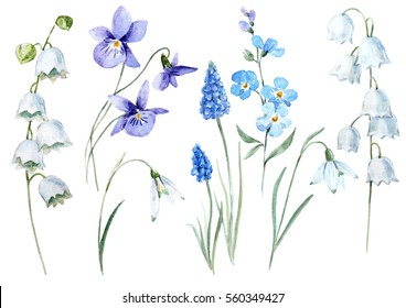 watercolor floral set spring flower lily of the valley. violet. snowdrop. blue muscari