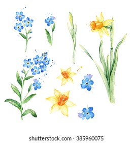 Watercolor floral set for your design. Watercolor Forget-me-not and Daffodil flowers