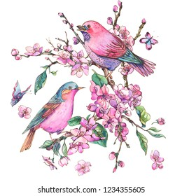 Watercolor floral spring greeting card, pink blooming branches of cherry peach, pear, sakura, apple trees and butterflies, beautiful birds in love isolated on white background